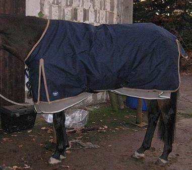 Regendecke 135 cm auf einem Deutschen Sportpferd