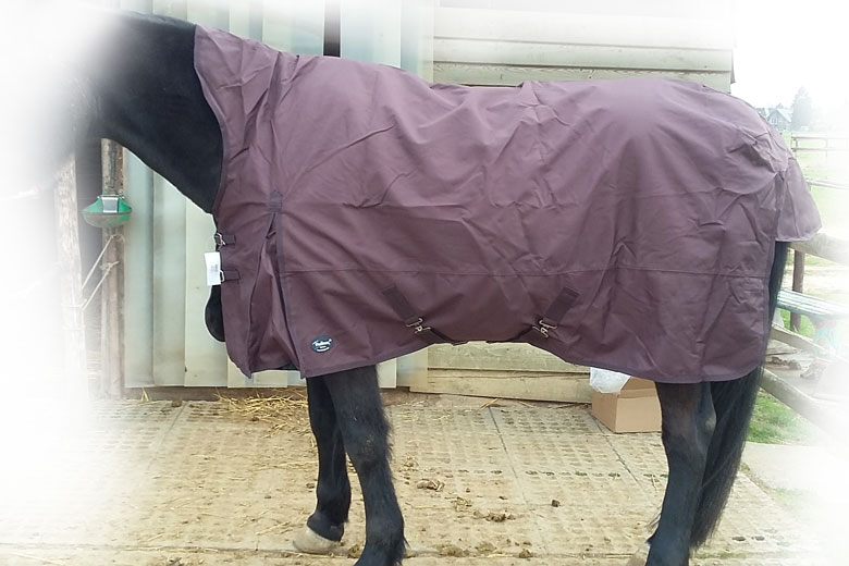 Regendecke Raincape auf Vollblut-Warmblut-Mix