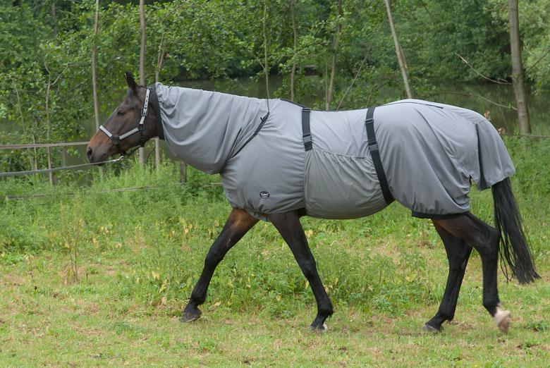Ekzemerdecke Pony
