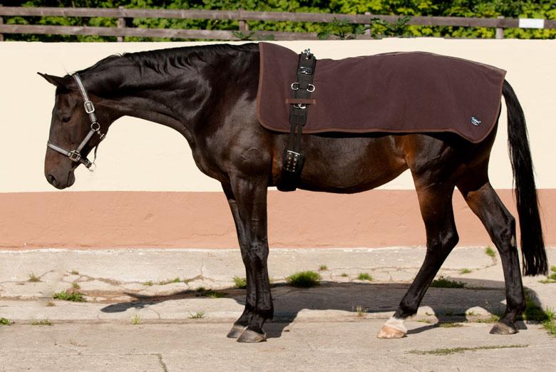 Rückenwärmer Pferd zum Longieren