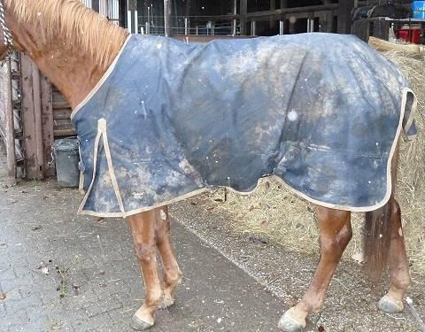 Rainmax Regendecke auf Quarter Horse