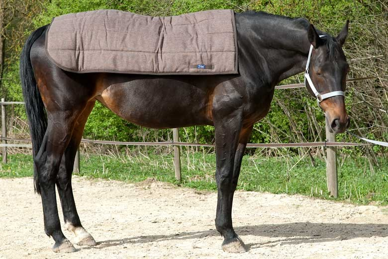 Rückenwärmer Pferd kaufen